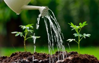 ¿Cómo regar tus plantas en vacaciones?