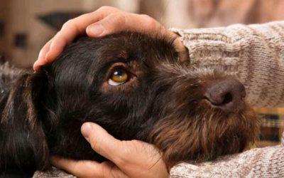 7 cosas que a tu perro no le gustan