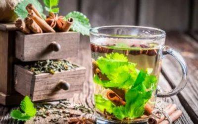 Hierba milagrosa: Descubre por qué tomar té de cilantro por un mes puede salvarte la vida ¡Lo amarás!