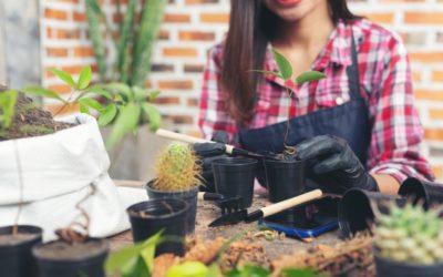 Cuidados básicos de las plantas de interior en primavera
